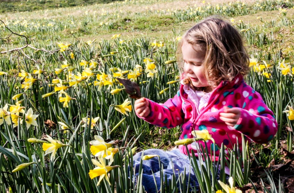Toddler playing in daffodils