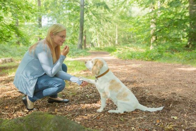 Guildford pet photographer